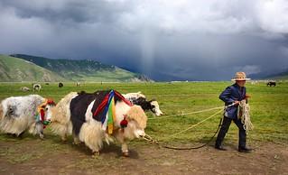 Rain on the vast Peltang plain, Tibet 2014