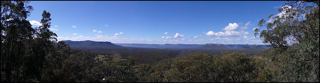 Pearsons Lookout CAPER TREE Valley NSW=