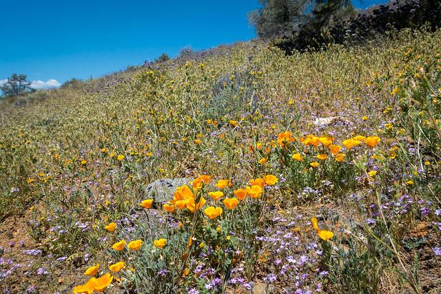 Hillside wildflowers, m663