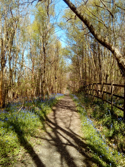 Bluebell alley