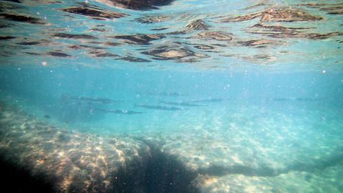 Koh Samui Snorkel -Coral cove