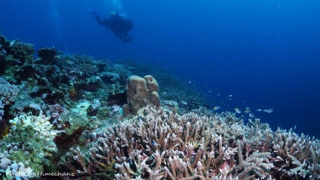 極上サンゴをのんびりまったり♪