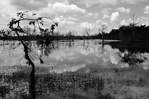 sky bw cloud lake tree water outdoors mono cambodia angkor nube camboya
