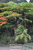 Maui, Iao Valley State Park