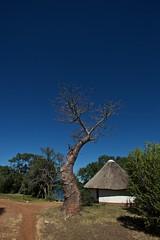 Zambia_  20162016-05-1009-30-29