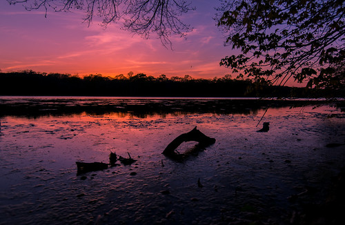 trees sunset sea ny bird silhouette night reflections photography suffolk nikon shadows longisland driftwood handheld serpent creature lochnessmonster nessie smithtown 2015 nissequogueriver d610 1635mm wowography blydenburghpark smithtownbay tomreese wowographycom 2863280