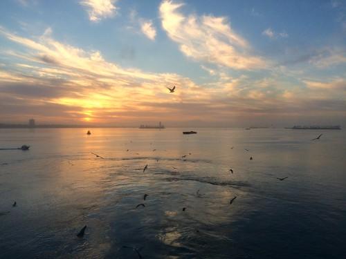 california sunrise harbor seagull longbeach iphone cruiseport
