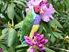 Needle Felted Animal Felt wool Bird Sculpture Lady Gouldian Finch Skyward by Gourmet Felted