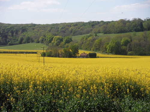 Farm House in Rape Oilseed Field, from Locksash Lane