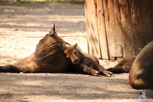 Tierpark Berlin 05.05.2016  090