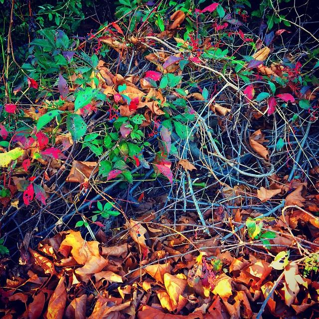 Fallen On Vines