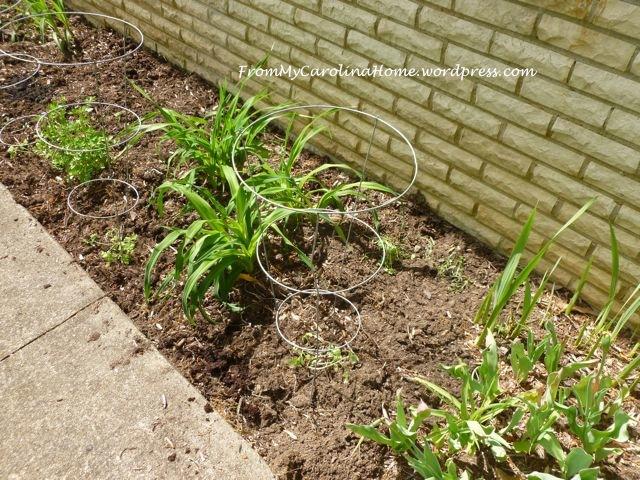 Planting May 2015