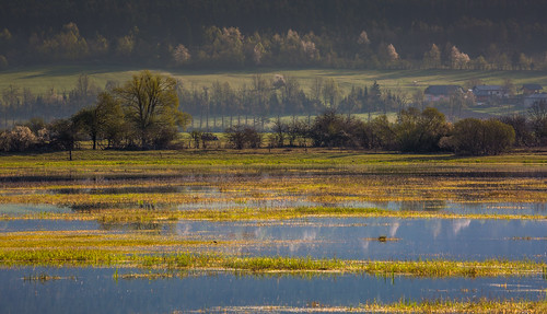 morning lake reflection nature water sunrise intermittent cerknica