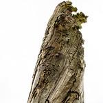 Baumstruktur V