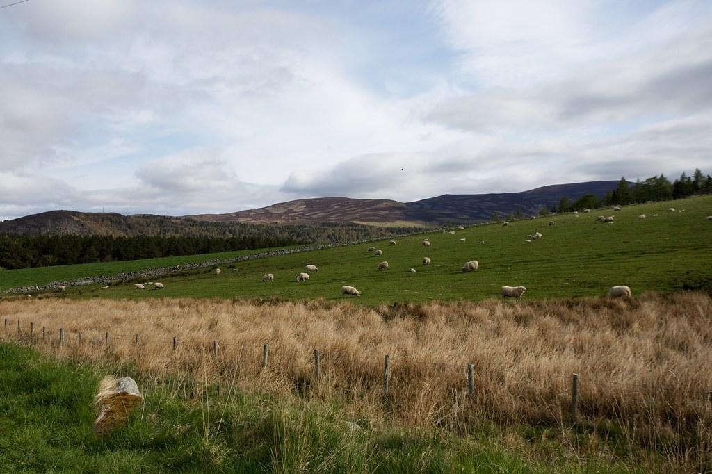 Upper Deeside Hills