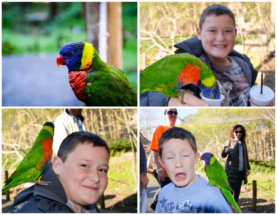 birds at riverbanks zoo