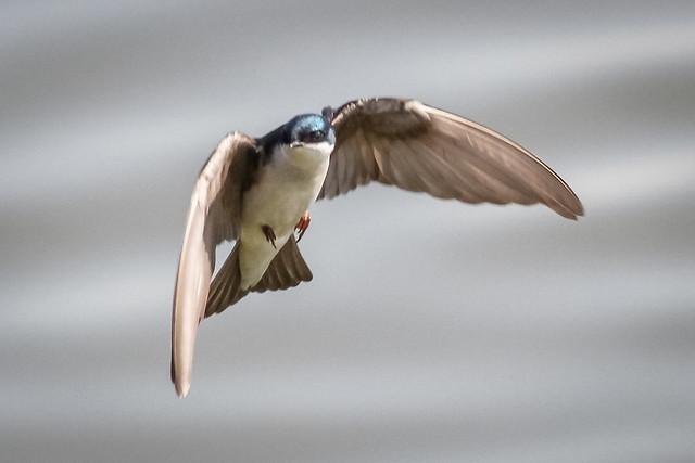 High speed flier.