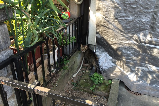 Today's Cat@2015-05-28