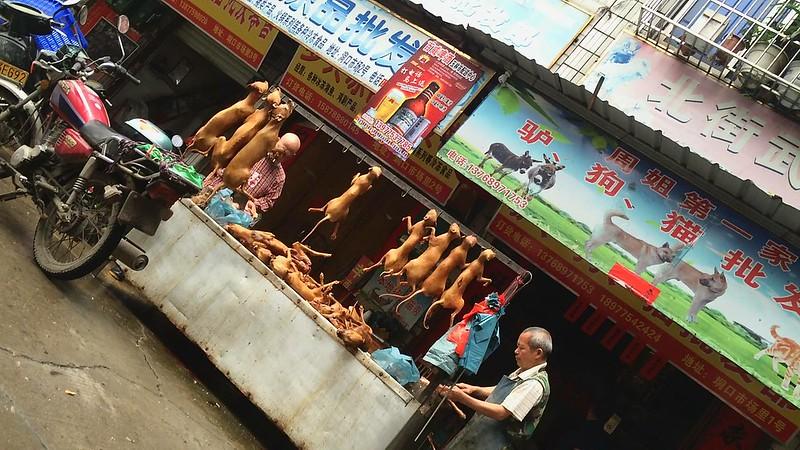 Zhoujie Di Yi Jia donkey, dog, cat wholesale