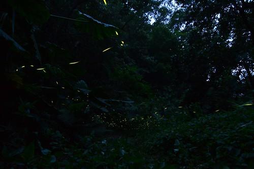 自然谷夜店1