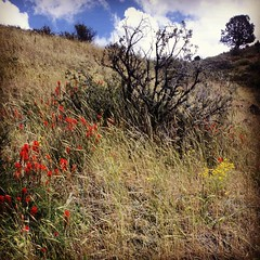 Trekking up the hills on a wildflower expedition. #nature #love #flowers #mountains #sky #clouds #landscape #wilderness #oregon #trees #hiking #trekking