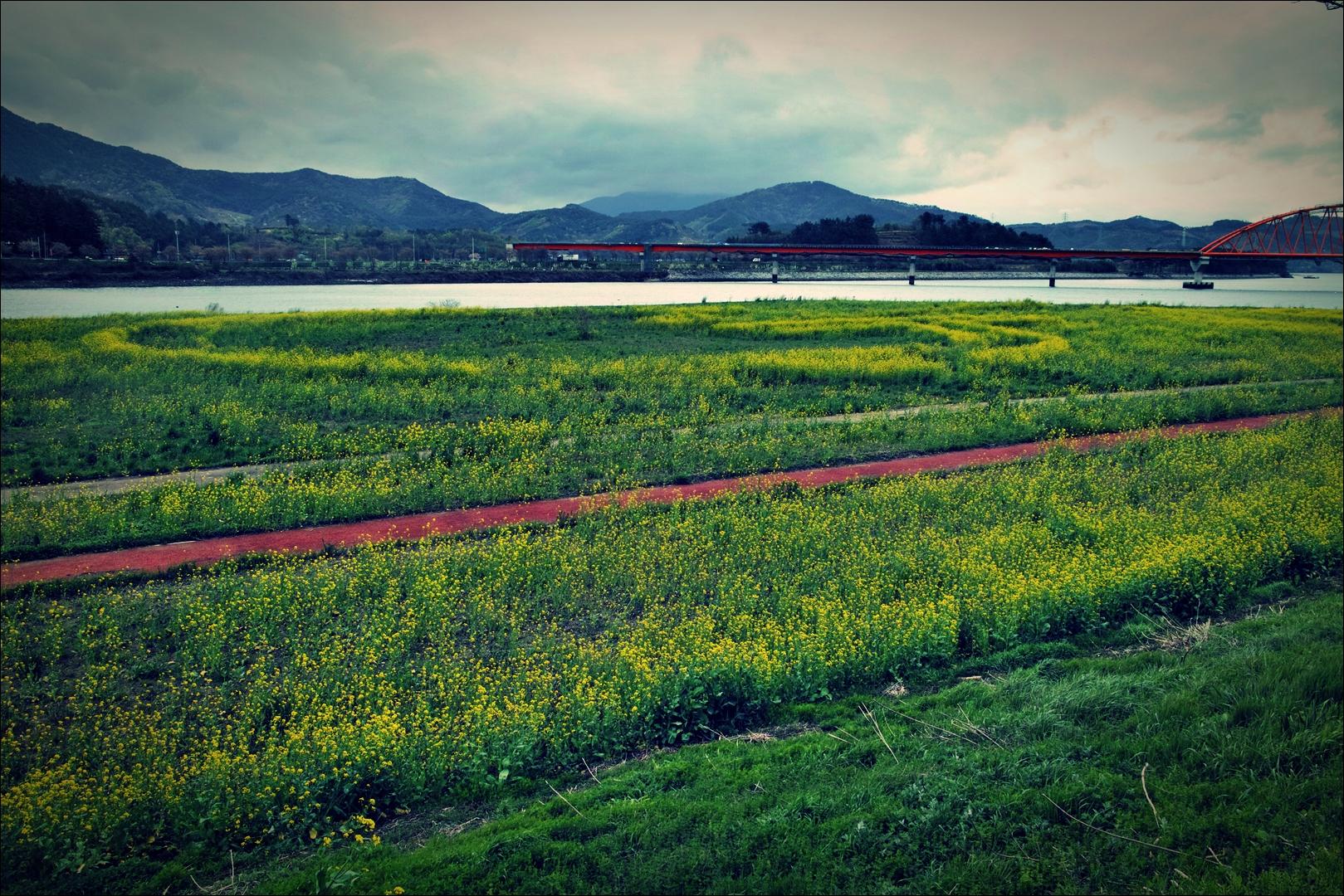 유채꽃-'섬진강 자전거 여행'