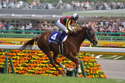 メジャーエンブレム Major Emblem(JPN) 第21回NHKマイルカップ(GI) 2016 NHK Mile Cup(G1)