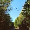 Byebye ! #birds #intothesouth #abindensüden #exploremore #adventuretime #relax #blue #v