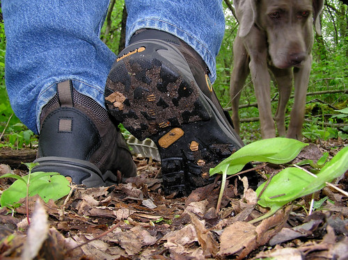 Mud and seeds on shoes