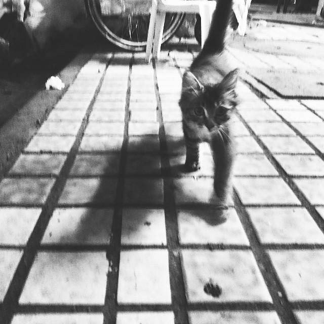 = ̄ω ̄= #cat