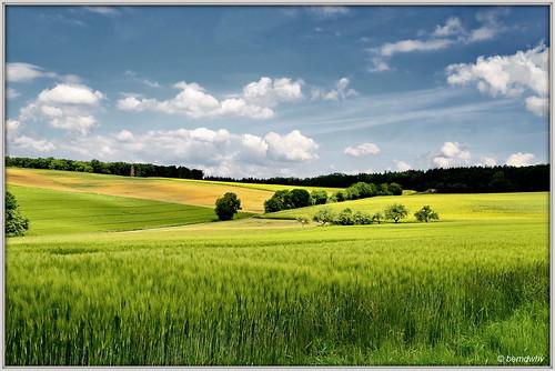 Rheinland-Pfalz / Getreidefelder bei Reitzenhain
