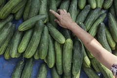 vegetable, produce, food, cucumber, gourd,