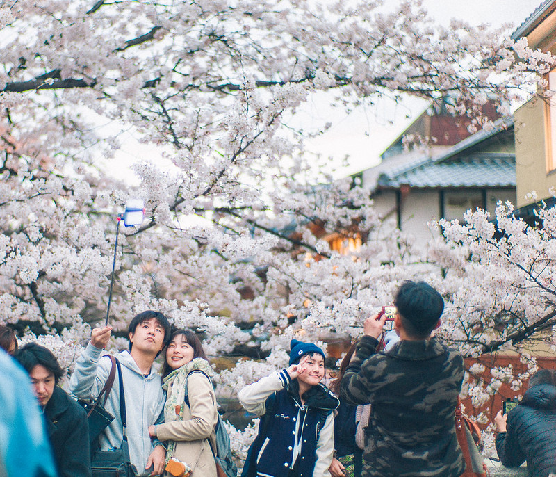 11.Roaming Under The Cherry Blossoms.