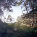 Ruby Beach Overlook by J.Sod