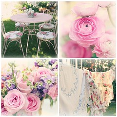 Pretty Roses by Lucia & Mapp