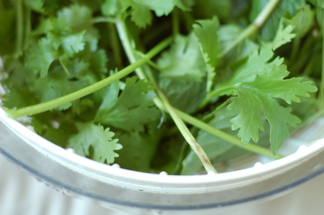 Cilantro in the salad spinner by Eve Fox, the of Eating, copyright 2015
