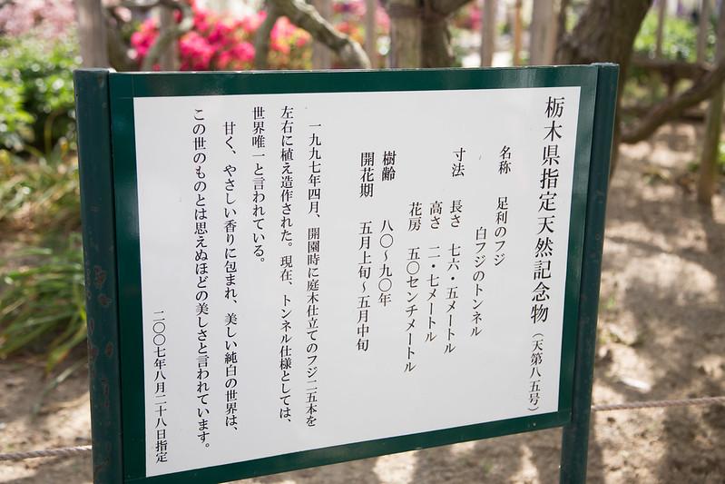 ashikaga_flowerpark-36