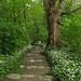 The path by aniko e