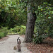Geese with their Babies Touring the Gardens of the Huntington. by LisaDiazPhotos