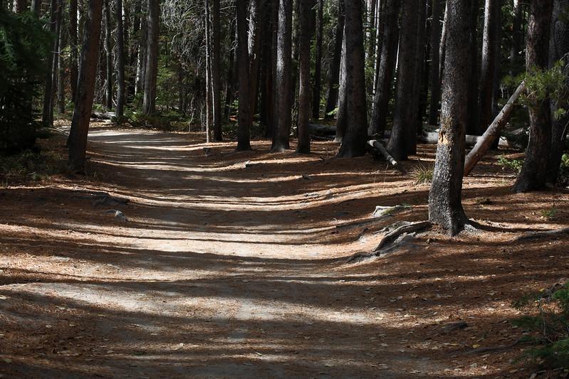 2016 10 14 - Wild Basin Trail - 9S3A2376