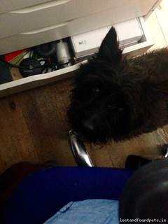 Tue, May 5th, 2015 Found Male Dog - Merrion Gates, Sandymount, Dublin