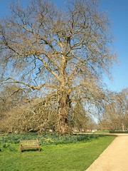 The Big Tree And The Bench