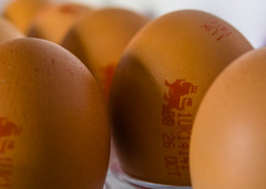eggs in fridge