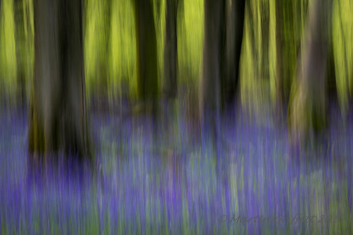 Sunlight beyond bluebell woods