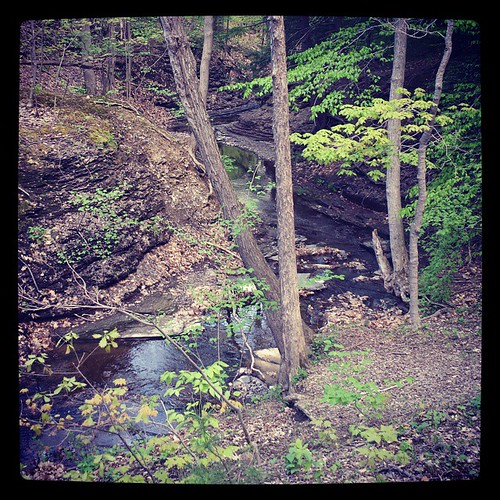 Stream and ravine. #ChestnutRidge #wny