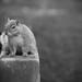 Secret Squirrel 21:52