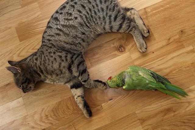 Gabriel and Parakeet