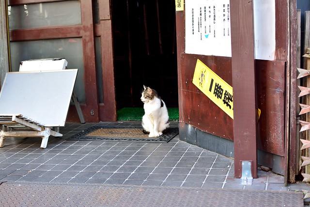 大須商店街5