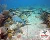 Scuba Diving in Key Largo, FL-June 2016-53