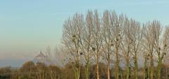 Mont St Michel and mistletoe